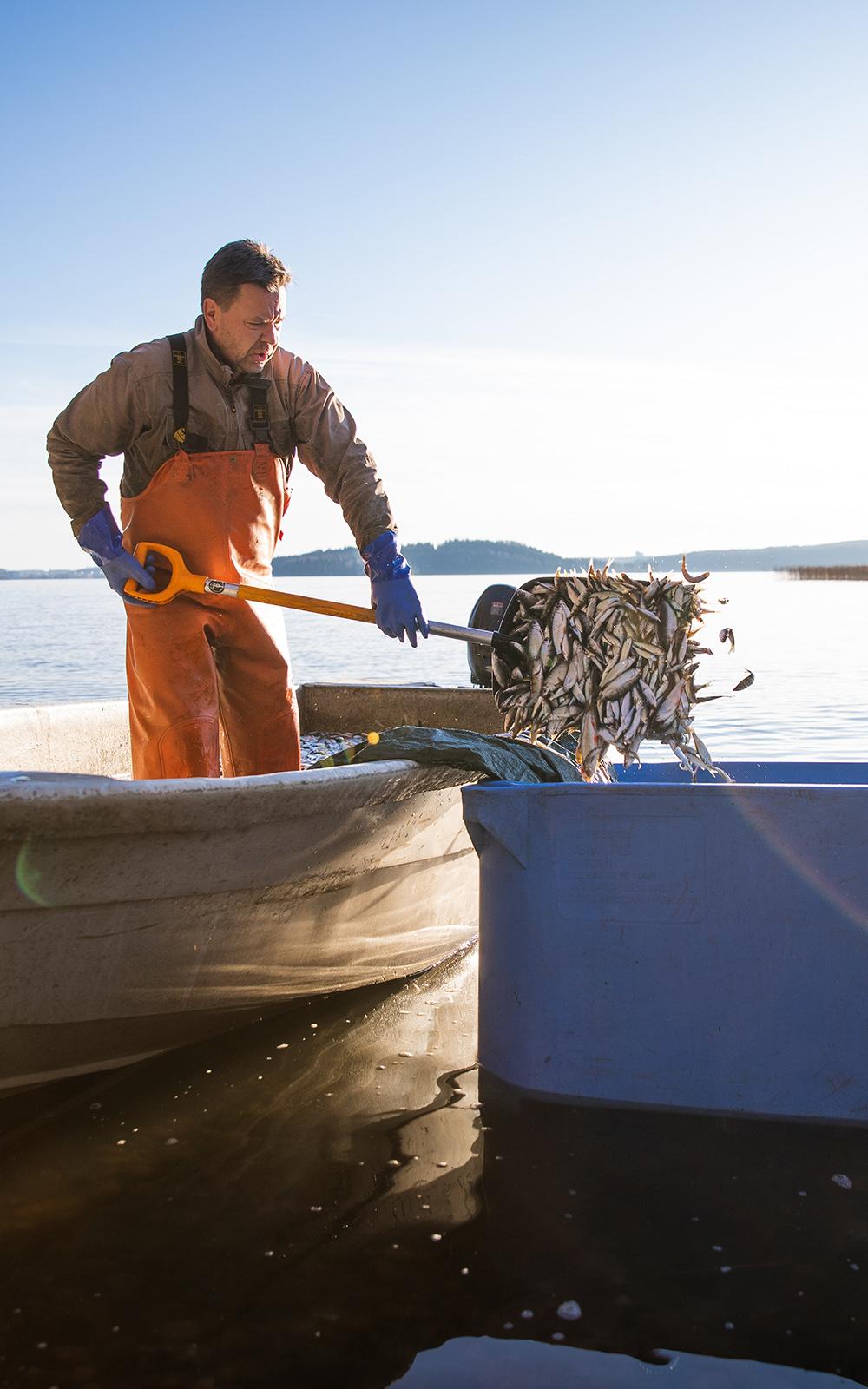 Hoitokalastus Vesijärvellä